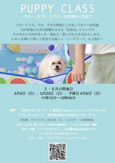 PuppyNose3E69C88202.jpeg